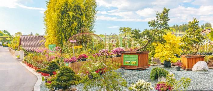 Farbenfroher Garten