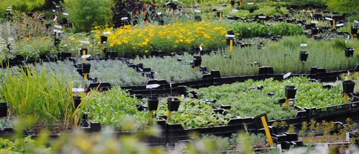 Kleinere Gärten